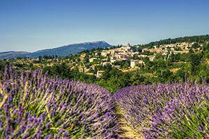 Provence-Alpes-Côte d'Azur champs de lavande