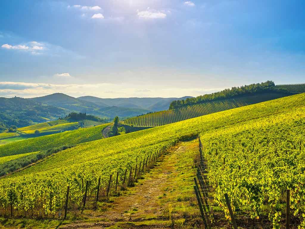 Domaine viticole à Chianti
